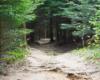 Jeden z tuneli utworzonych przez drzewa - głównie jodły z pięknym zapachem - przy szlaku górskim prowadzącym na Bukowe Berdo w Bieszczadzkim Parku Narodowym wychodząc z Mucznego.