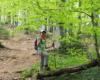 Po wyjściu ze szlaku prowadzącego wzdłuż gęsto rosnących jodeł wchodzimy do lasu bukowego - w końcu szlak prowadzący na Bukowe Berdo :-)