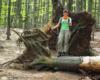 Jedno z drzew powalonych z korzeniami przez wiatr przy szlaku górskim prowadzącym na Bukowe Berdo z Mucznego w Bieszczadzkim Parku Narodowym. To świetny pomysł na wycieczkę w Bieszczadach.