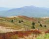 Widok z Bukowego Berda w kierunku Połoniny Caryńskiej. Wszystkie góry w obrębie Bieszczadzkiego Parku Narodowego. To najpiękniejsze miejsce na wycieczki jednodniowe w Bieszczadach.