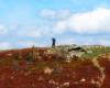 Samotny wędrowca na szlaku Bieszczadzkiego Parku Narodowego przebiegającego przez Bukowe Berdo - pogoda na wycieczkę górską była słoneczna, ale wiał bardzo silny wiatr...