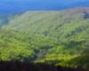 Na bieszczadzkich bukach powoli pojawiają się liście początkiem maja - uroku temu zdjęciu dodają cienie chmur na dole i górze zdjęcia :-)