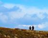 Wędrowcy na szlaku przebiegającym po szczycie Bukowego Berda w Bieszczadzkim Parku Narodowym - na tym zdjęciu wyglądają jak by wybrali się na wycieczkę w chmury...