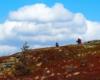 Chmury nad Bieszczadami, a dokładnie nad szlakiem prowadzącym po Bukowym Berdzie - to jedna z najpiękniejszych wycieczek, na którą warto wybrać się z Mucznego.