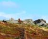 Skały na Bukowym Berdzie w Bieszczadzkim Parku Narodowym - to nasz ulubiony szlak i pomysł na wycieczkę po Bieszczadach.