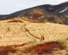Samotna turystka wędrująca po szlaku na Bukowym Berdzie - tu nie ma schodów, drutów i taśm ograniczających wolność, a turystów jest niewielu - polecamy takie wycieczki jednodniowe po Bieszczadach.