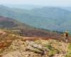 Czyż szlak przebiegający przez Bukowego Berdo w Bieszczadzkim Parku Narodowym nie jest piękny? Polecamy to miejsce na wycieczkę jednodniową po Bieszczadach - najpiękniejszych atrakcjach Województwa Podkarpackiego.