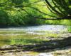 Gałęzie drzew nad korytem rzeki Wisłok, nad którą znajduje się wiele atrakcji w Beskidzie Niskim.