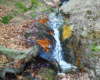 Warto wspiąć się powyżej wodospadu widzianego niemal dosłownie z koryta rzeki Wisłok kilka metrów wyżej, gdyż mały potoczek tworzący ulubiony wodospad Jana Pawła II przedziera się doliną pośród niezwykle stromych zboczy skalnych Beskidu Niskiego...
