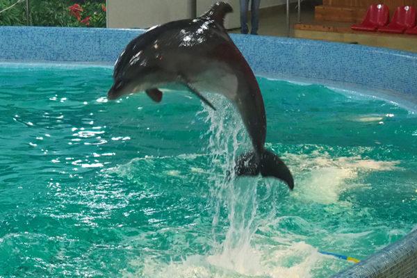 Delfinarium Truskawiec - to jedna z atrakcji wycieczki jednodniowej z Bieszczad na Ukrainę do Truskawca, Drohobycza i Kulczyc.