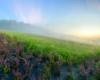 Serce na granicy Myczkowiec, Soliny i Bóbrki jest wykonane z krzewów posadzonych na agrowłóknienie.