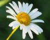 Kwiaty łąk w pobliżu granicy turystycznej między Bieszczadami, a Beskidem Niskim początkiem jesieni - to również może być atrakcją w Województwie Podkarpackim...