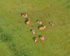 Krowy leżące na jednej z łąk w Kulasznem, a widziane podczas lotu paralotnią nad Bieszczadami :-)