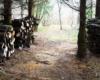 Drewno przygotowane na bieszczadzkie kuligi z końmi na najdłuższej trasie w Województwie Podkarpackim.