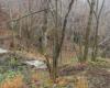 Ścieżka do mostu bieszczadzkiej kolejki leśnej przygotowana - wykoszona, wygrabana, a w podmokłym miejscu ułożone drewna...