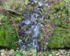 Widok na koryto potoku wyłożone kamieniami z piaskowca widziane od góry.