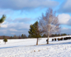 Widok na stado żubrów stojących na środku łąki obok brzozy z widokiem na Beskid Niski ;-)
