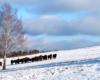 Słońce, chmurki, śnieg i żubry żyjące na wolności - czy czegoś więcej do szczęścia w Bieszczadach potrzeba?