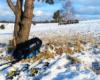 To zdjęcie wykonałem dla zobrazowania odległości mojej skromnej osoby do żubrów - samica może ważyć nawet 600 kilogramów...